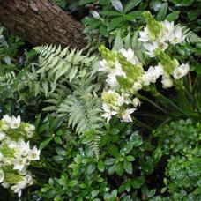 Tropical Landscape by r.a.nelson-plantsman
