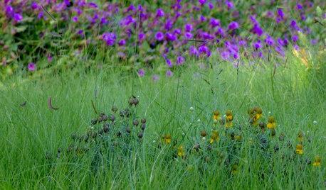 Nuovi Trend: Creare un Meadow, il Prato Semi-Incolto, in Giardino