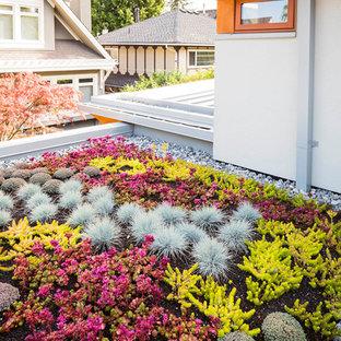 Esempio di un giardino xeriscape minimal sul tetto