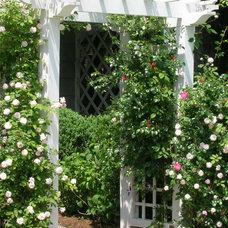 Traditional Landscape by Garden Designs by Elizabeth