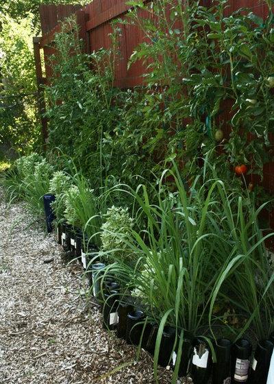 Traditional Landscape Vegetable Garden against Fence