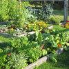 Азы садовода: Севооборот овощных культур и совместимость растений