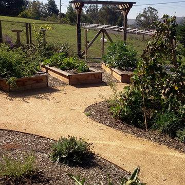 Vegetable garden - Petaluma