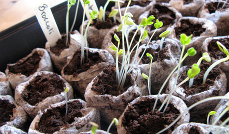 Your Essential Seed-Starting Glossary