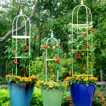 Vegetables & Herbs in Containers