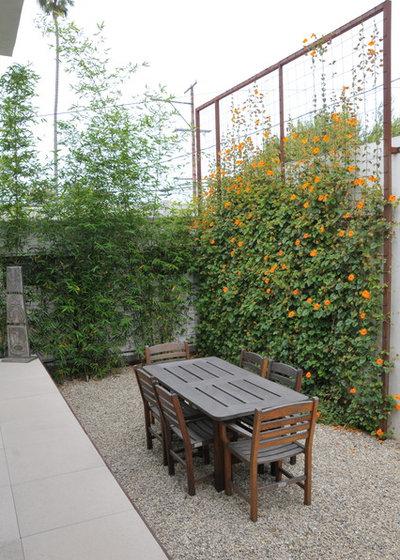 Moderne Jardin by SB Garden Design
