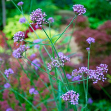 10 Purple Summer Flowers Pollinators Will Love