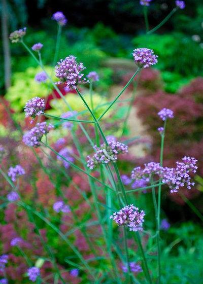 エクレクティック 庭 by Jay Sifford Garden Design