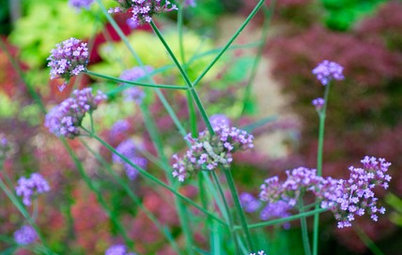 10 Purple Summer Flowers Pollinators Will Love