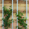 See 10 Ways a Trellis Can Boost Your Garden