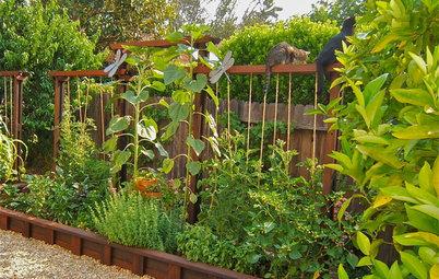 梅雨から暑い夏へ。水やりに気をつけながら植物を見守ろう【7月のガーデニング】