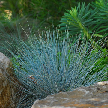 Very drought-tolerant, low maintenance, and year-round beautiful garden