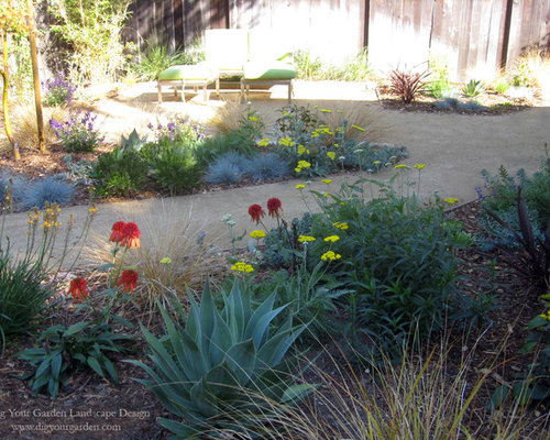 Vibrant plant colors textures and dg replace lawn in fairfax ca - Mediterranean garden plants colors and scents ...