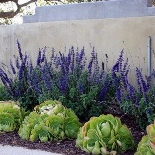 Inspiration for a small contemporary back xeriscape fully shaded garden in Santa Barbara with gravel.