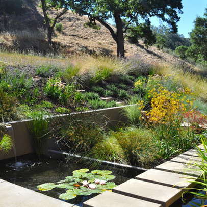 Modern Home aquatic garden Design Ideas, Pictures, Remodel and Decor