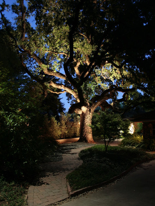 oak tree lighting houzz