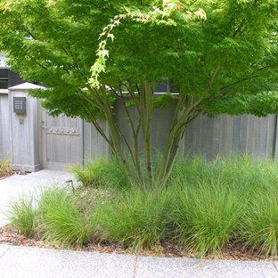 サンフランシスコの小さい、夏のコンテンポラリースタイルのおしゃれな前庭 (庭への小道、日向、マルチング舗装) の写真