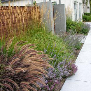 Ispirazione per un piccolo giardino minimalista esposto in pieno sole davanti casa in autunno con un ingresso o sentiero e pavimentazioni in cemento