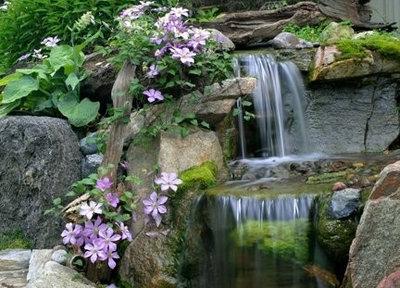 トロピカル 庭 by Aquascape