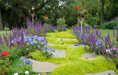 Piante Tappezzanti e Calpestabili Che Trasformano il Giardino