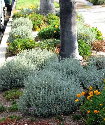 12 piante sempreverdi da giardino per l 39 inverno vi - Sempreverde da giardino ...