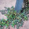 Conseils de pro pour optimiser le désherbage du jardin
