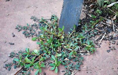 Weeds Be Gone! Natural Weed-Control Tips