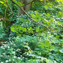 other shrubs