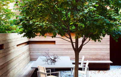 Pretty Trees for Patios, Paths and Other Tight Spots