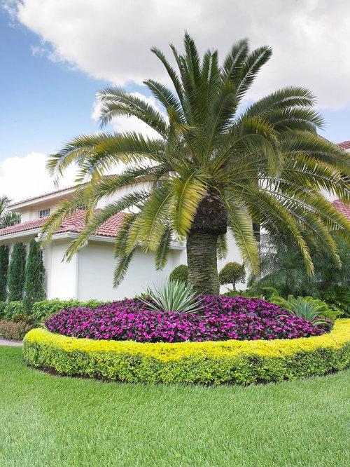 Foxtail Palm Houzz