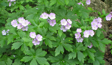 10 Essential Native Perennials for the Great Lakes and Upper Midwest