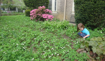 Wild Strawberry Lawn Replacement