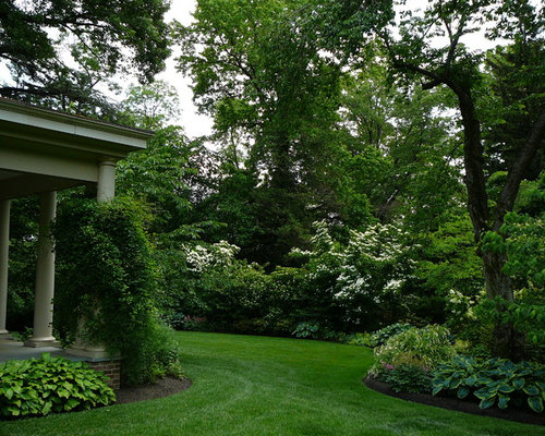 Evergreen Privacy Shrubs Houzz