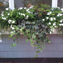 Cape Cod Window Boxes/Container Designs