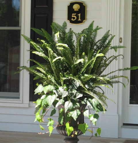 Fern Planter Home Design Ideas Pictures Remodel And Decor