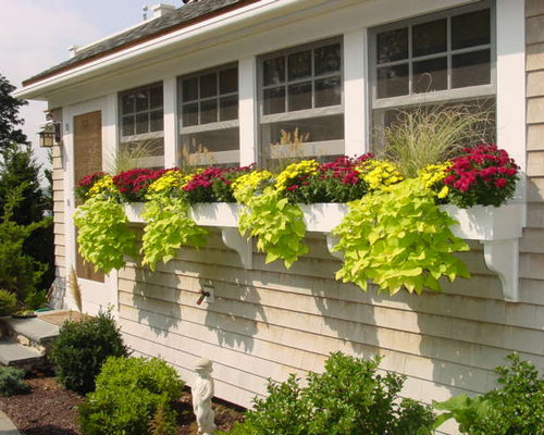 Sweet Potato Vine Container Houzz