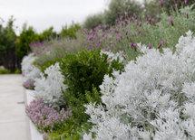 White shrub?