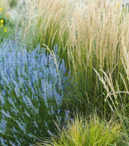 Karl foerster reed grass houzz for Ornamental grasses design plans