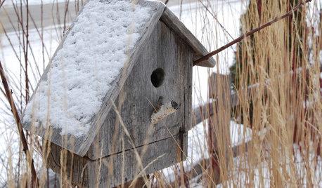 How to Create a Wildlife-friendly Garden in Winter