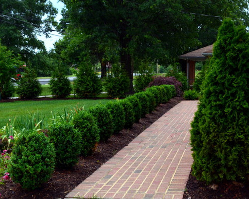 Green Giant Arborvitae Ideas Pictures Remodel And Decor