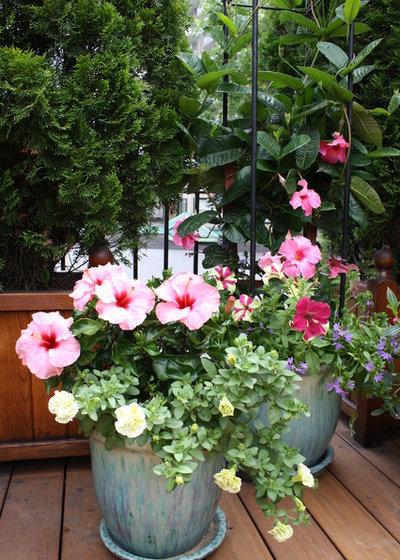 Классический Сад by Wisteria & Rose