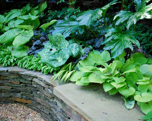 Perennial plants zone 4 home design ideas pictures for Forest garden design zone 4