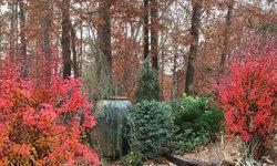 Woodland garden entrance