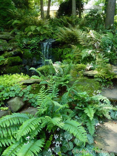 Christmas fern nature 39 s gift to the woodland garden for Woodland landscape design