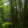 Let Nature Inspire Your Landscape: Ideas for a Woodland Garden