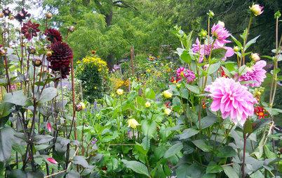 Pregunta al experto: Cómo cuidar el jardín en septiembre