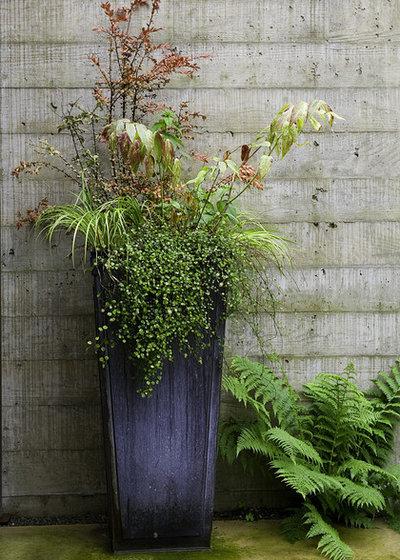 Minimalistisch Garten by Kenneth Philp Landscape Architects