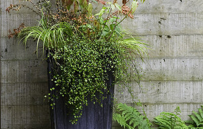 The Secret Formula for Grouping Plants in a Pot