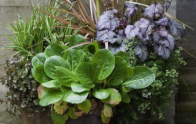 Comment cultiver différentes plantes dans un même pot ?