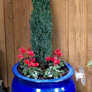 Ispirazione per un giardino formale american style esposto a mezz'ombra di medie dimensioni e davanti casa in inverno con un giardino in vaso e ghiaia